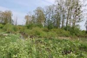 rzeka-lopa
